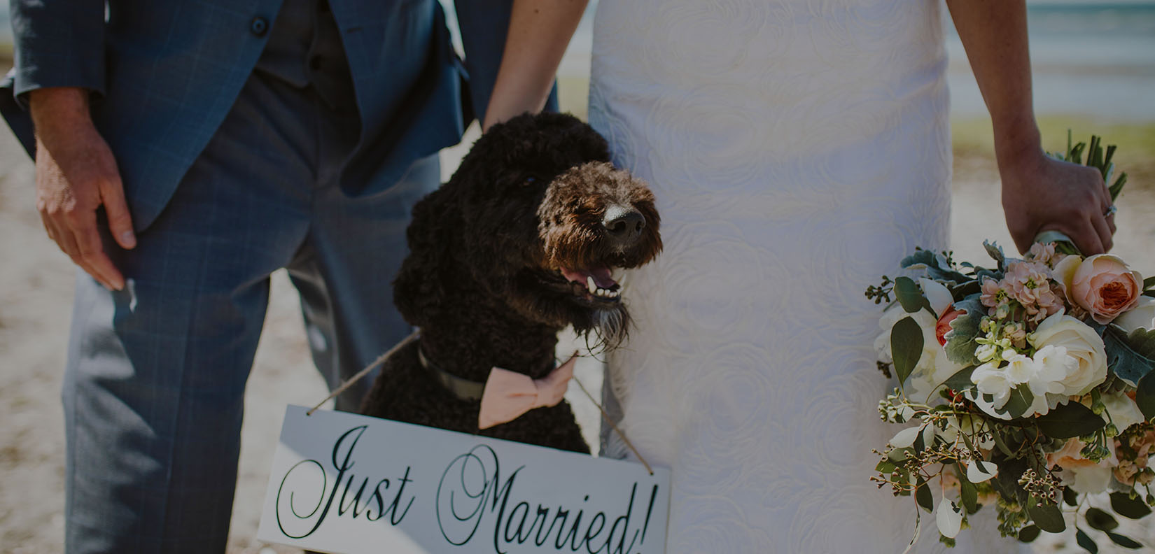 dog with wedding sign